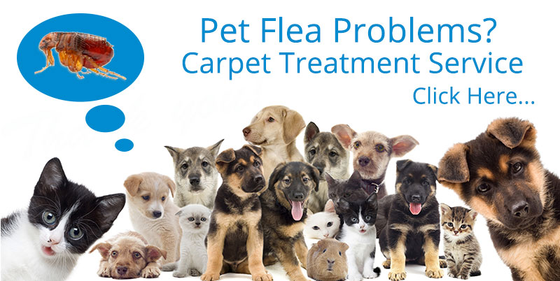 Pet Flea Problems?